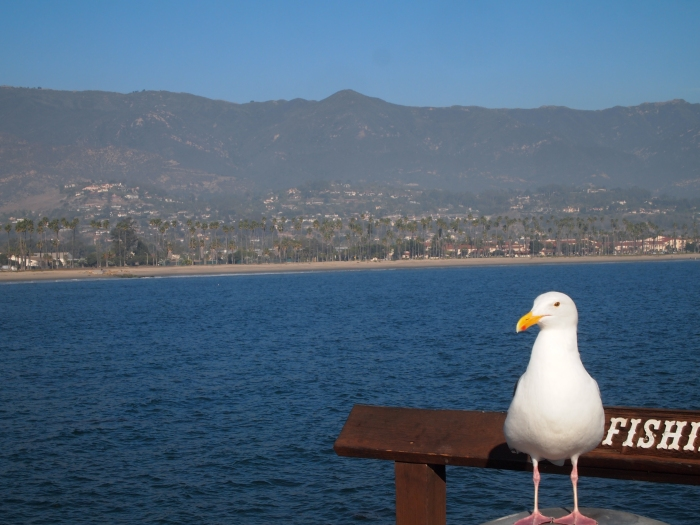 Seagull on Stearns Wharf