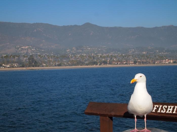 Seagull on Stearns Wharf