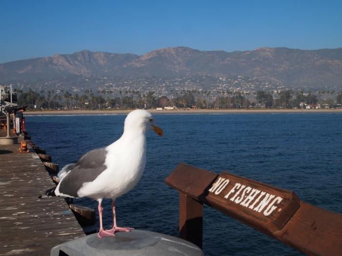 No fishing, Mr. Seagull!