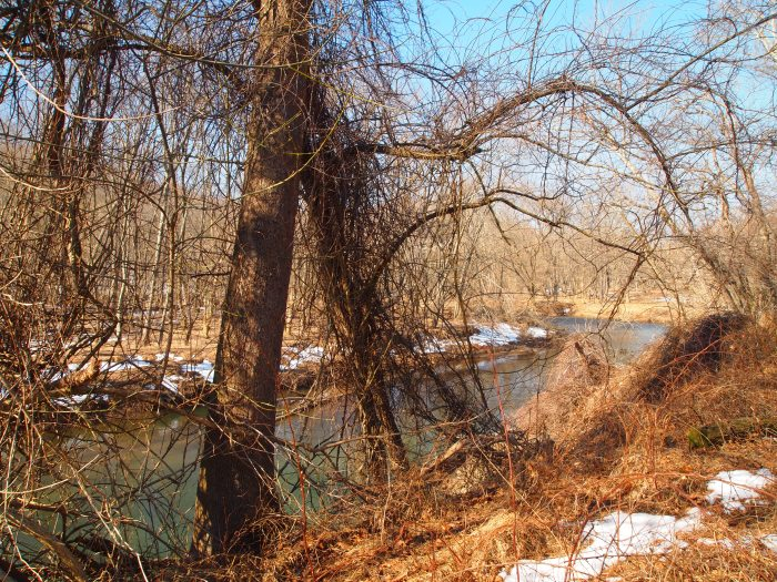 the Patapsco River