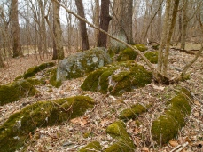 moss-covered rocks