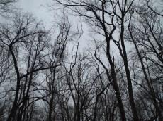 still winter treetops