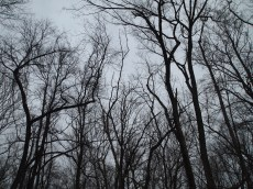 still winter treetops