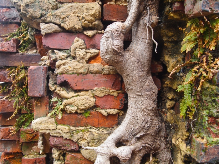 tree trunk on a brick wall