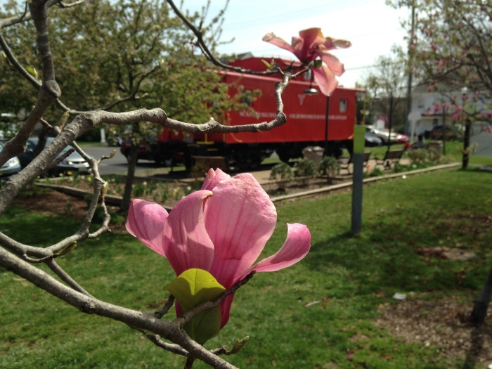 a blossom in front of the Vienna train