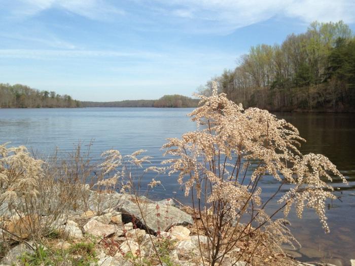 Along Burke Lake