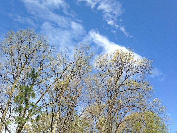 Trees and clouds in Oakton
