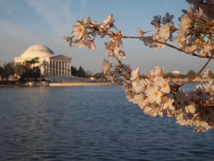 Cherry blossoms & Jefferson Memorial