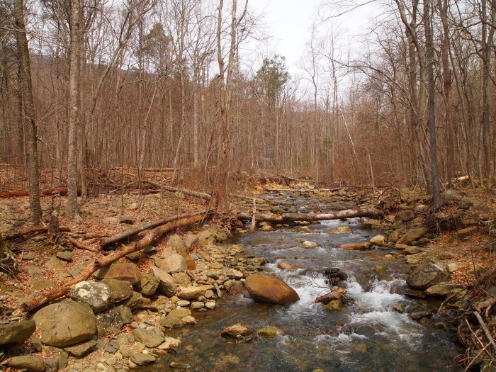 White Oak Canyon stream