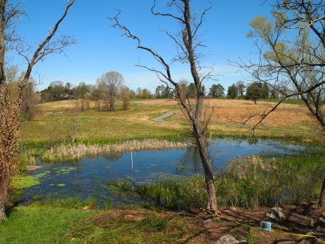 ponds and wetlands