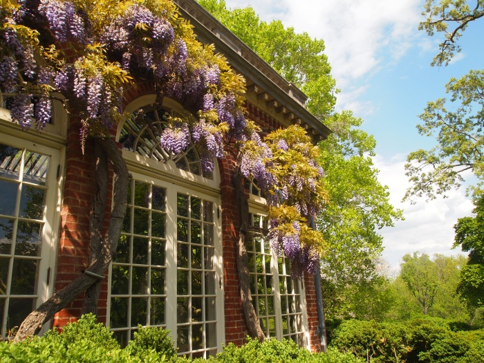 Orangery and wisteria