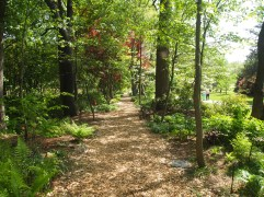 path through hostas