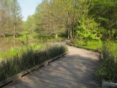 Boardwalk though the wetland park