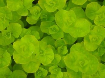green, green