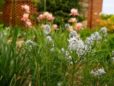 Allium & Irises