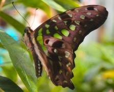 butterfly in the butterfly exhibit