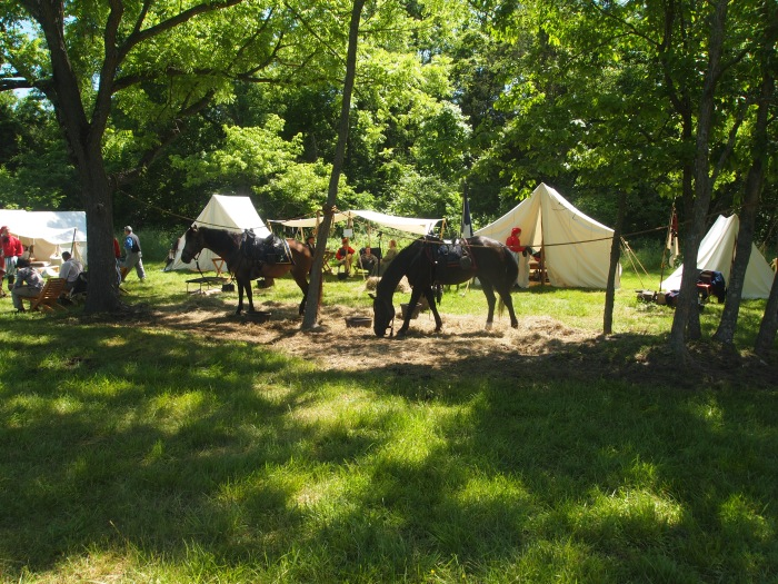 horses and tents