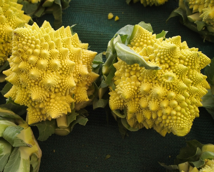 Strange alien cauliflower