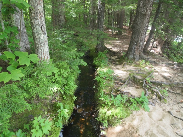 We find a little stream running parallel to the river