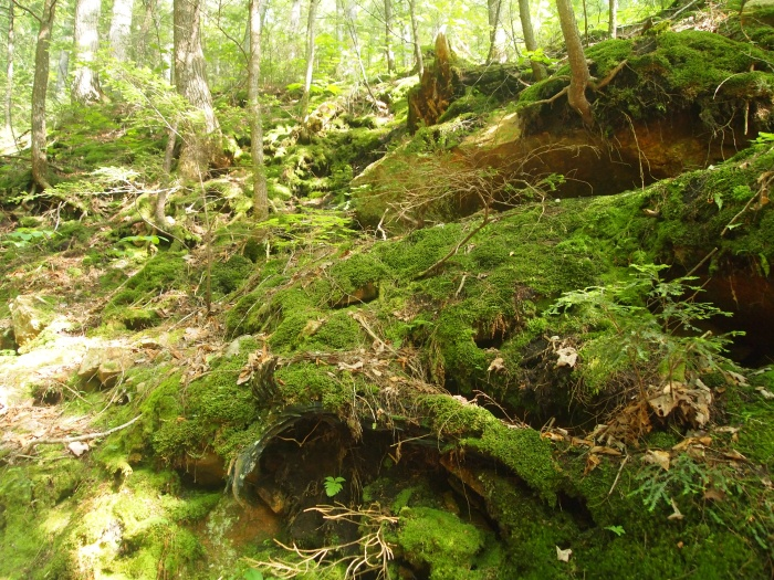 Mossy pathways at the Flume Gorge