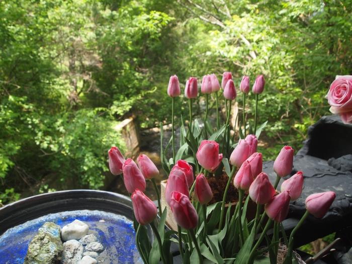 Primrose Garden Gift Shop