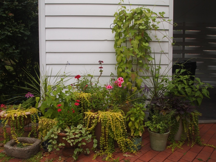 Her potted plants, July 2014