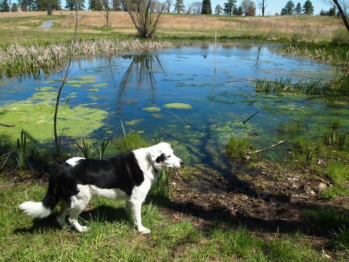 Bailey at the Virginia Arboretum