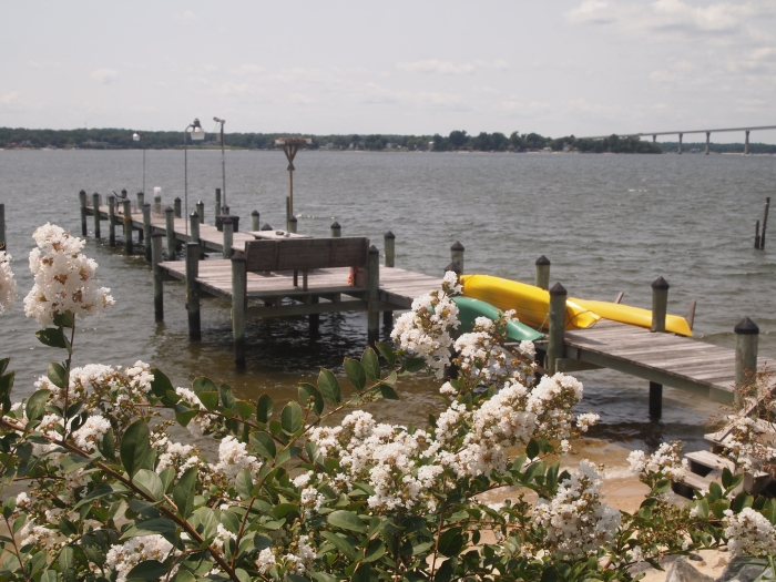 flowers and pier