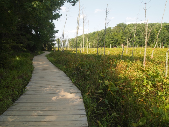 boardwalk through wetlands