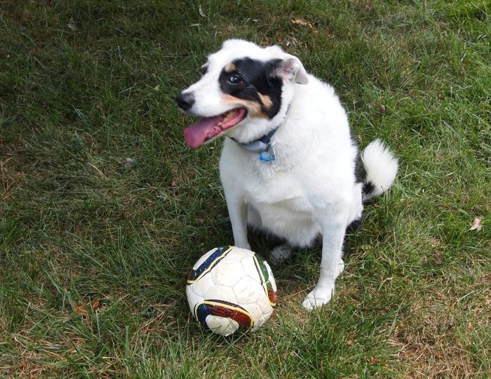 Bailey and his ball