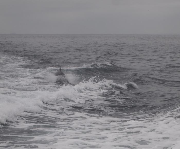 underwater dolphins