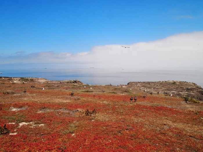Anacapa Island and the Pacific Ocean