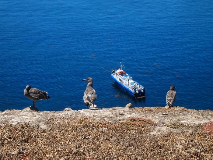 seagulls as vanguards