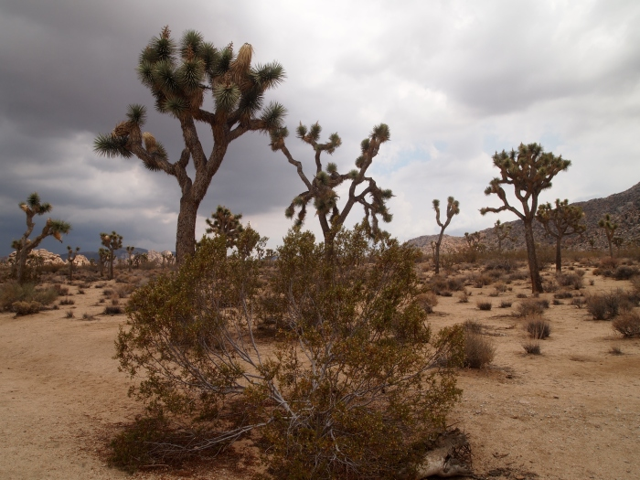 ominous clouds in the desert