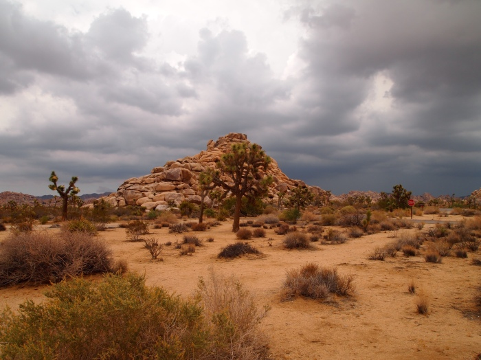 the clouds move in to Joshua Tree