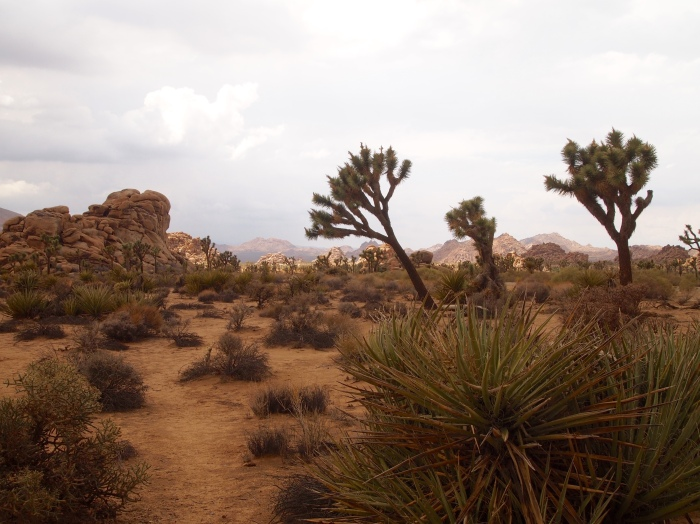 the desert before a rainstorm
