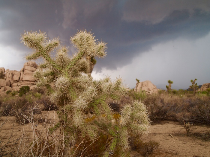 pricklies in the clouds
