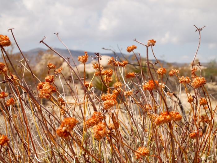 orange desert plants