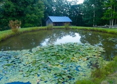 Lotus pond on the grounds
