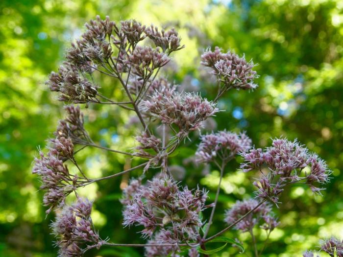 bees' bushes