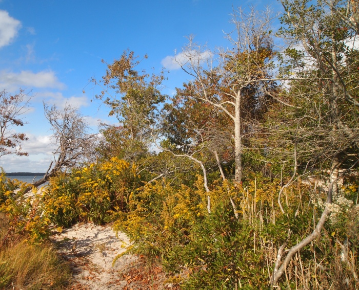 the path along Chincoteague Bay