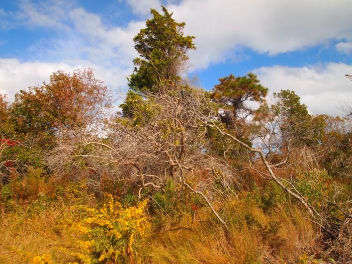 bayside foliage