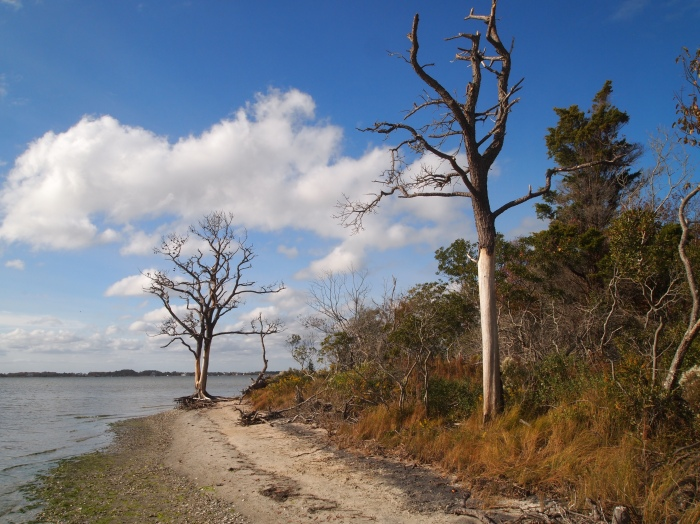 beach at Chincoteague Bay