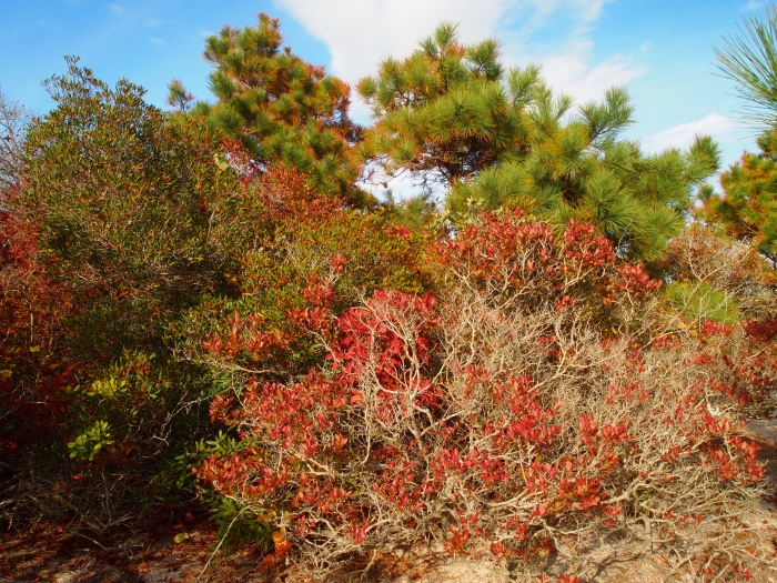 colorful bushes on the Dunes Walk