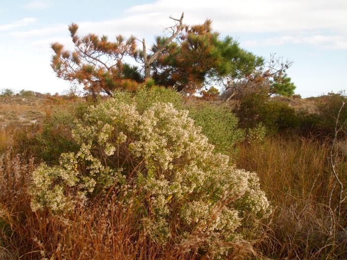 bushes & trees on the Dunes Walk