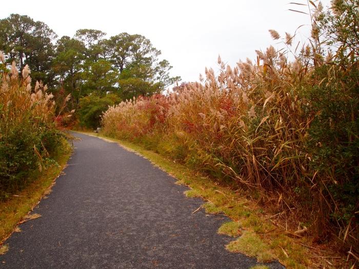 sea grasses along The Woodland Trail