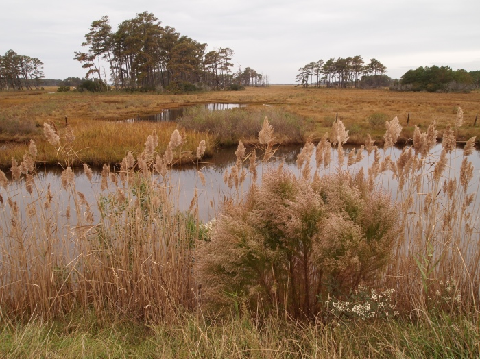 marshland along Beach Road