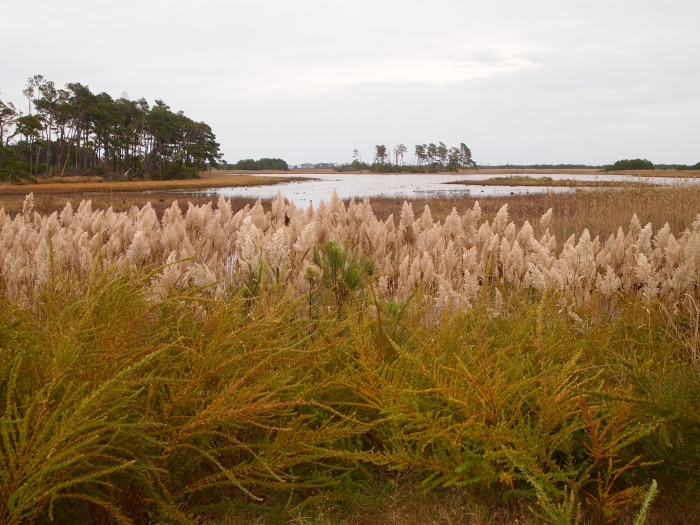 sea grasses and marshland along Beach Road