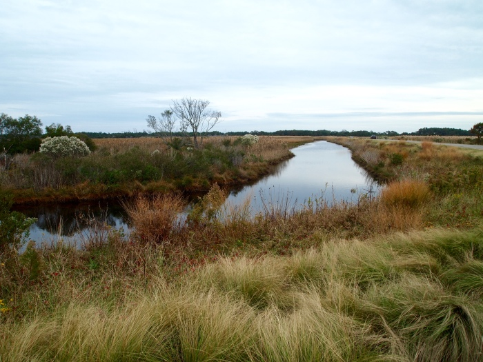 marshland at Black Duck Pool
