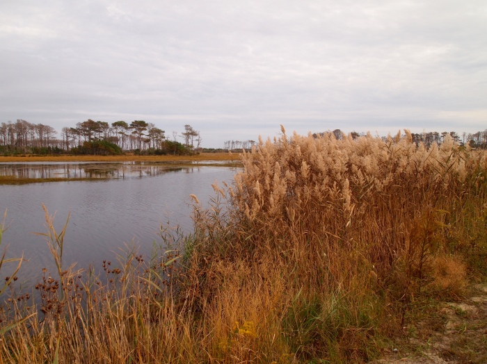 Snow Goose Pool and sea oats
